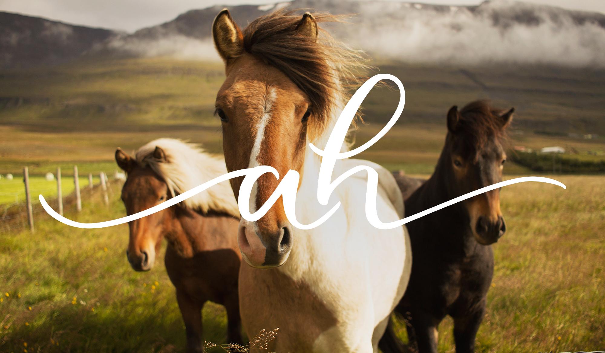 Abouthorses