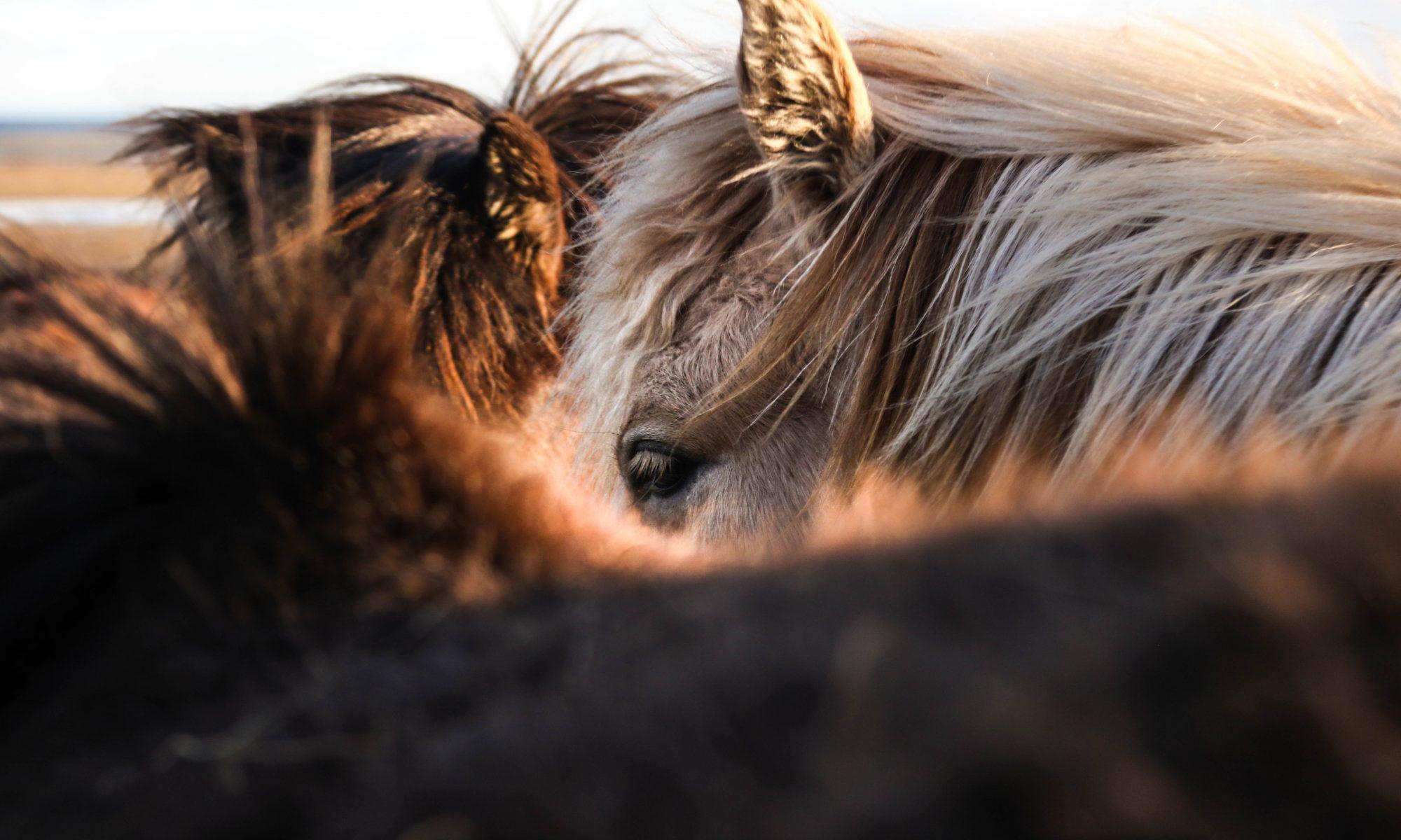 Sentimientos de los caballos